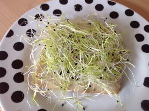 Brot mit veganem Rauchfleisch, Tomaten-Basilikum-Paste und Sprossen
